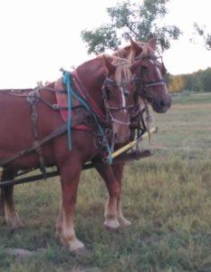 hayrides-billings-fall